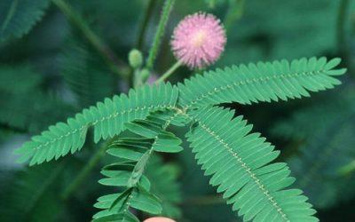 ¿Las plantas tienen memoria?